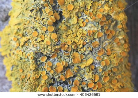 Shore Lichen Stock Photos, Royalty.