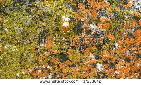 Lichen Rock Stock Photos, Royalty.