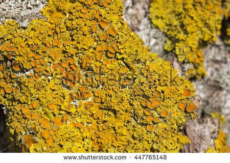 """shore_lichen"""" Stock Photos, Royalty."""