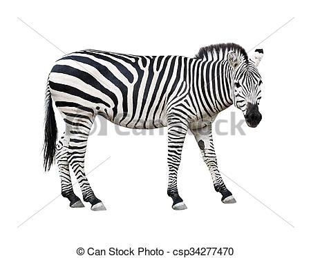 Picture of Zebra cutout.