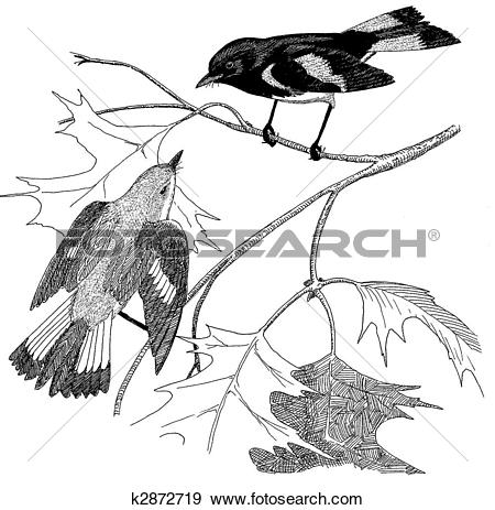 Stock Illustration of American Redstart Pair k2872719.