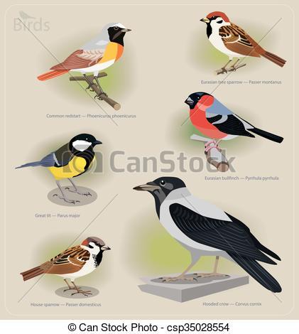 Clipart Vector of Image set of birds: common redstart, sparrow.
