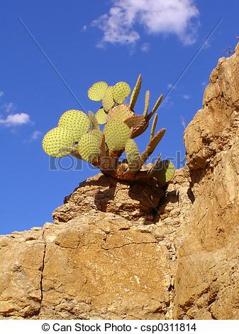 Stock Photo of Cactus on Rock.
