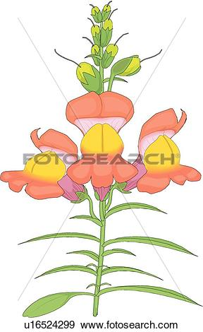 Snapdragon Stock Photos and Images. 657 snapdragon pictures and.