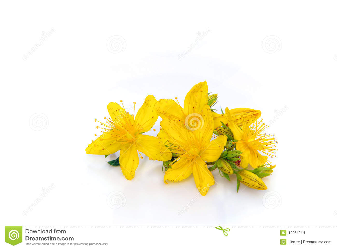 St Johns Wort Isolated Stock Images.