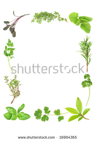 Herb Leaf Selection Forming A Frame Of Fresh Organic Basil, Silver.