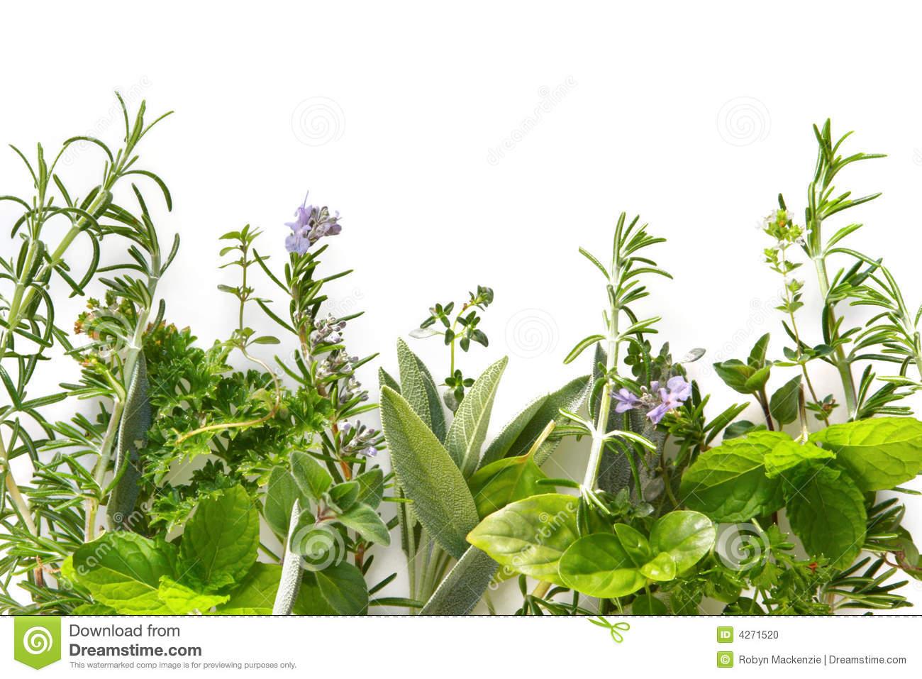 Herb Border Stock Photo.