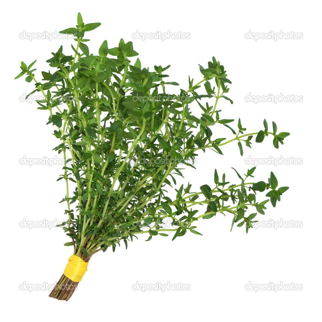 Herb Leaf Clipart.