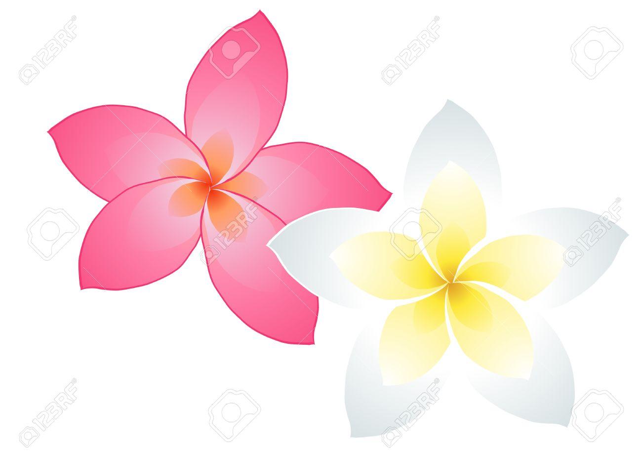 Illustration Of Two Frangipani Flowers Isolated On White Royalty.