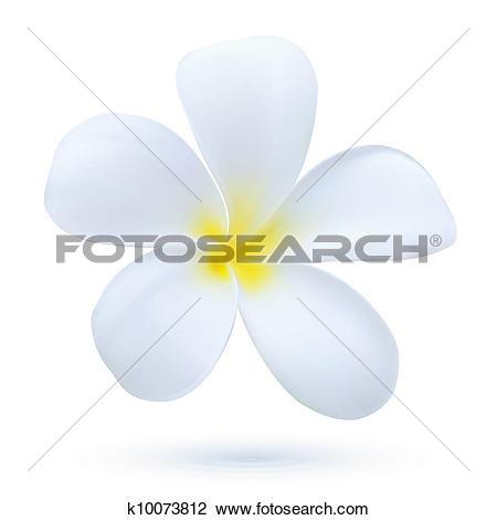 Clipart of Hawaii flower Frangipani, white tropical Plumeria.