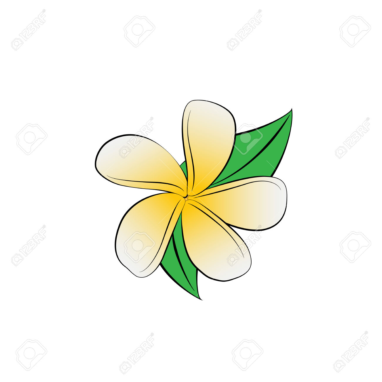 Vector Cartoon Frangipani Flower On White Background. Royalty Free.