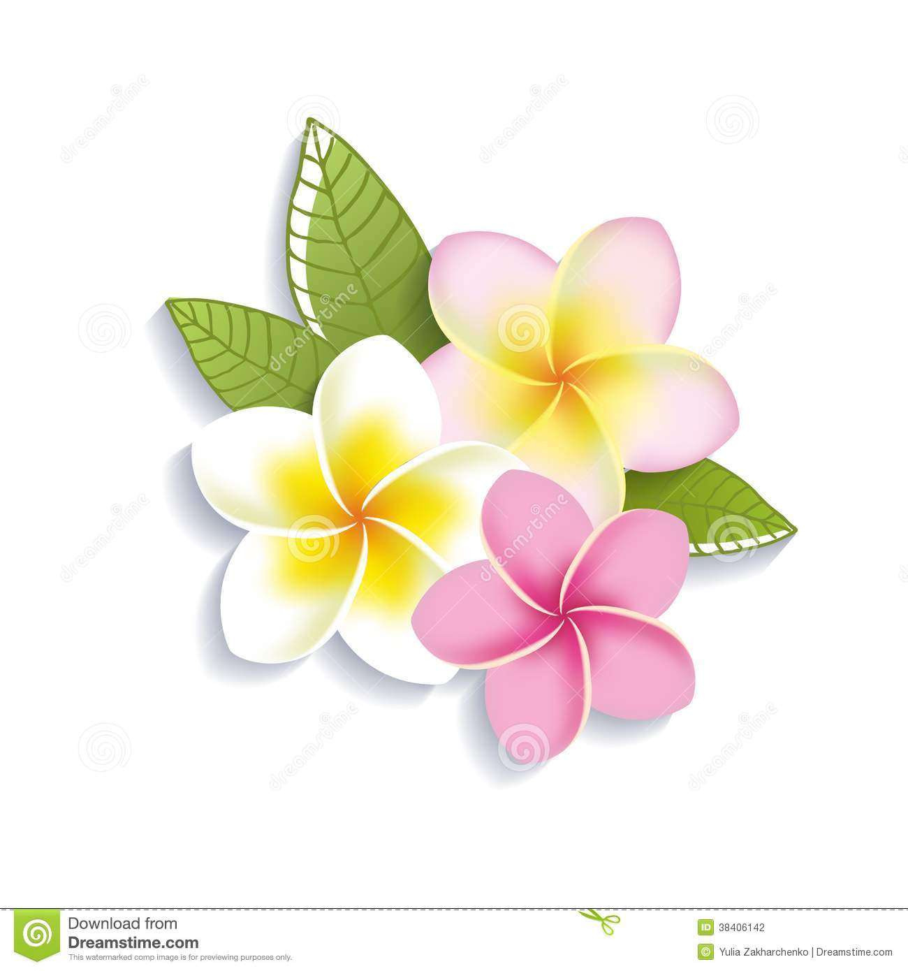 Plumeria Flower Clipart.