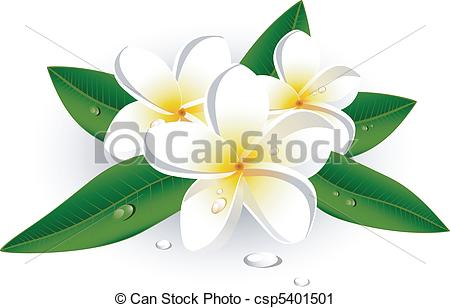 Frangipani Stock Photo Images. 14,297 Frangipani royalty free.