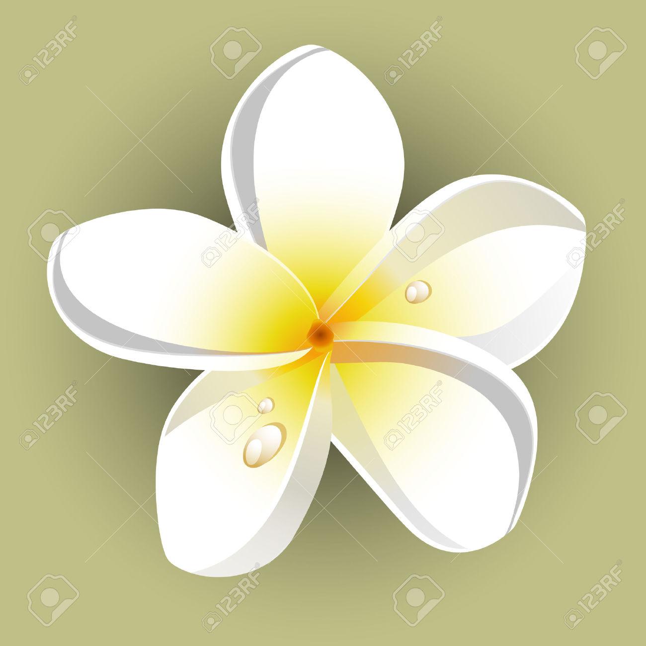 White Plumeria (Frangipani). Isolated. Royalty Free Cliparts.
