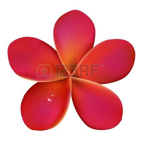 4,843 Frangipani Cliparts, Stock Vector And Royalty Free.