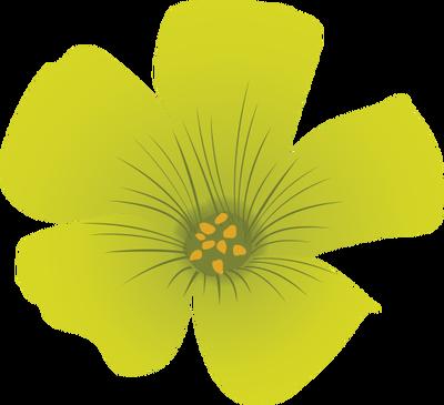 Oxalis stricta (Common Yellow Woodsorrel).