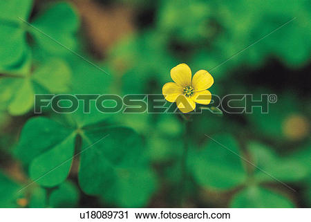 Stock Photography of blossom, flower, bloom, flowers, plants, wood.