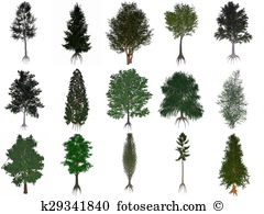 Yew Illustrations and Clipart. 17 yew royalty free illustrations.