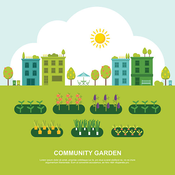 Best Community Garden Illustrations, Royalty.
