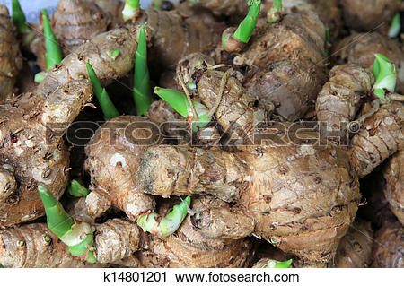 Stock Photography of A group of Curcuma Comosa k14801201.