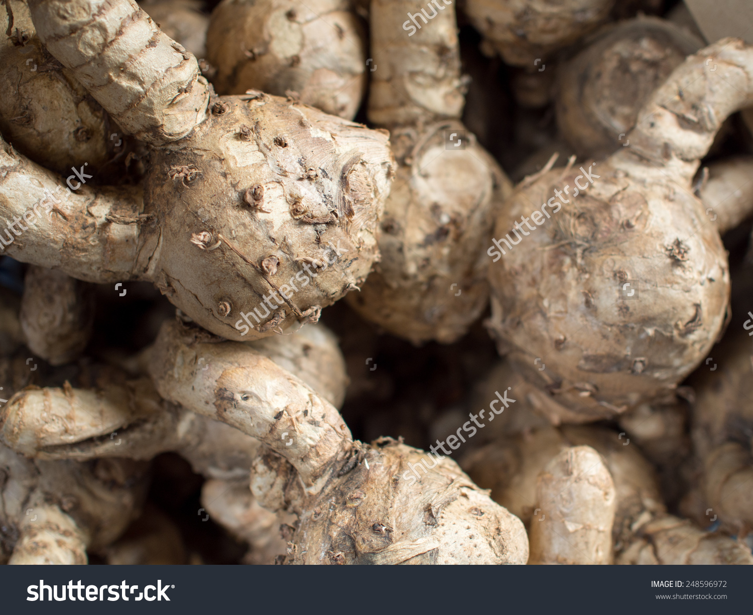 Curcuma Comosa Wanchakmotluk Name Thai Stock Photo 248596972.