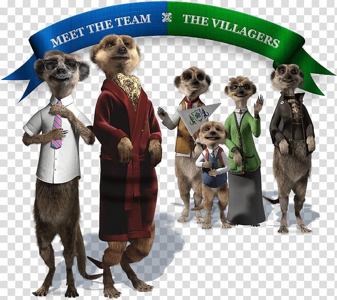 Cartoon Street, Meerkat, Compare The Meerkat.