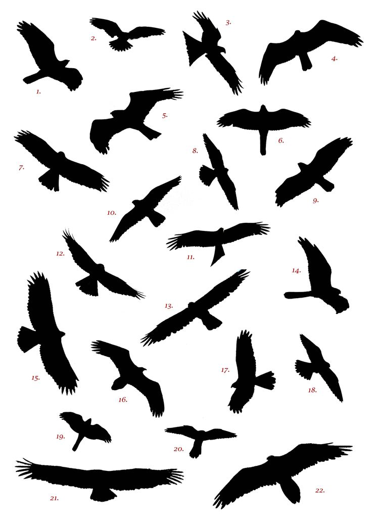 988 best images about 1s Bird Silhouettes on Pinterest.
