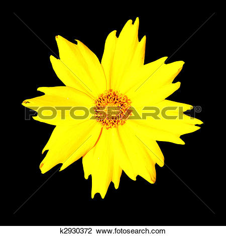 Stock Photo of Yellow Flower.