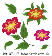 Compositae Illustrations and Stock Art. 31 compositae illustration.