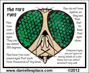 Insect eyes clipart.