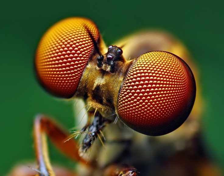 30 Awesome Insects Macro Photography.