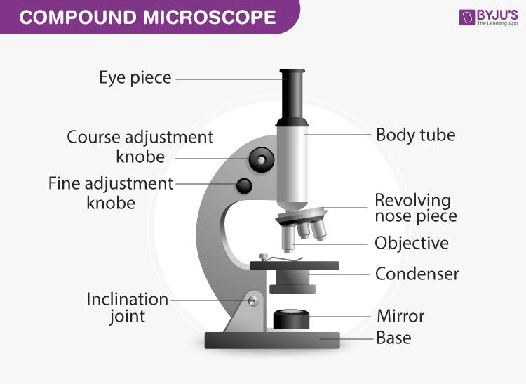 Compound Microscope: Parts of Compound Microscope.