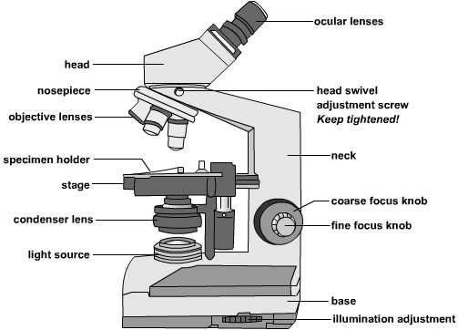 Compound microscope clipart 5 » Clipart Station.