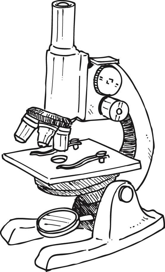 Compound microscope clipart idea wikiclipart.