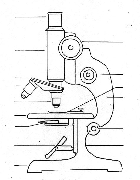 Free Microscope Drawing, Download Free Clip Art, Free Clip Art on.
