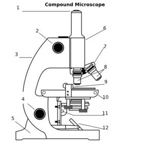 Compound Microscope clip art.