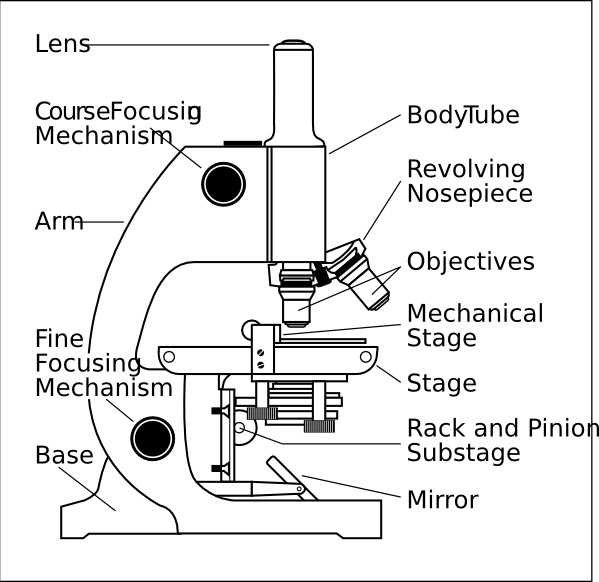 Compound microscope clipart 6 » Clipart Station.