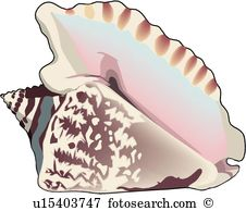 Conch Clip Art Royalty Free. 11,623 conch clipart vector EPS.
