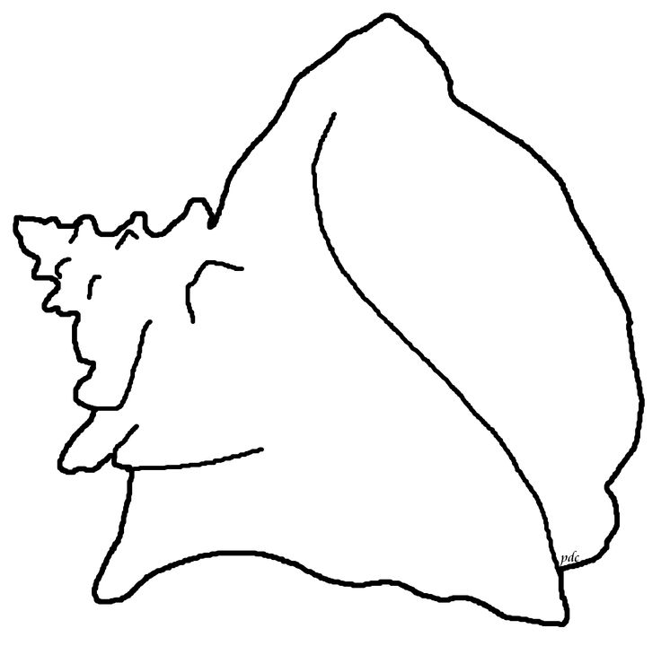 Queen Conch Shell Clipart.