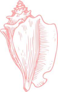 Conch cliparts.