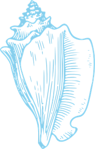 Sky Blue Conch Shell PNG, SVG Clip art for Web.