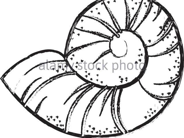 Conch Shell Drawing at PaintingValley.com.