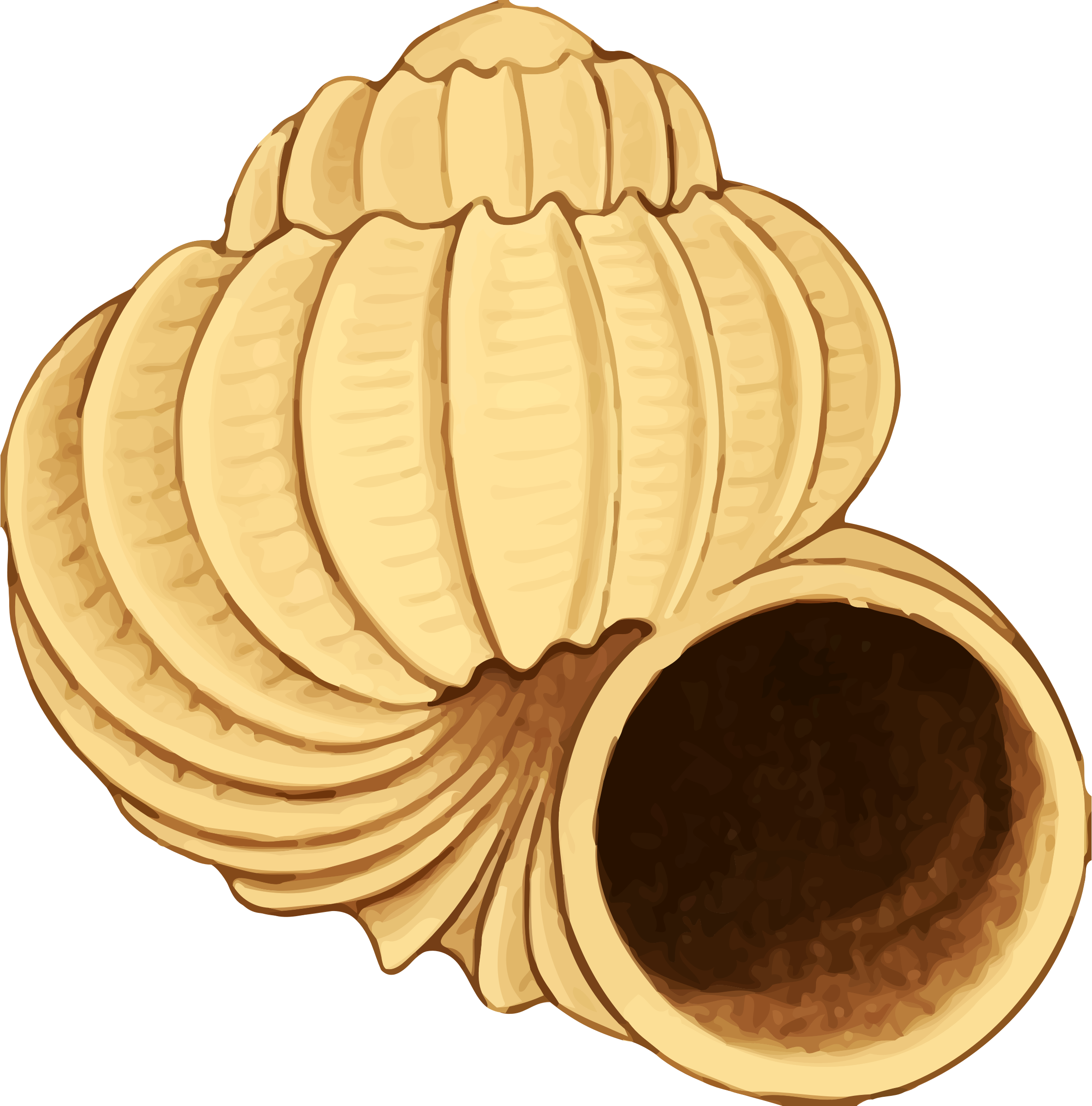 Twisting Conch shell Vector Clipart image.