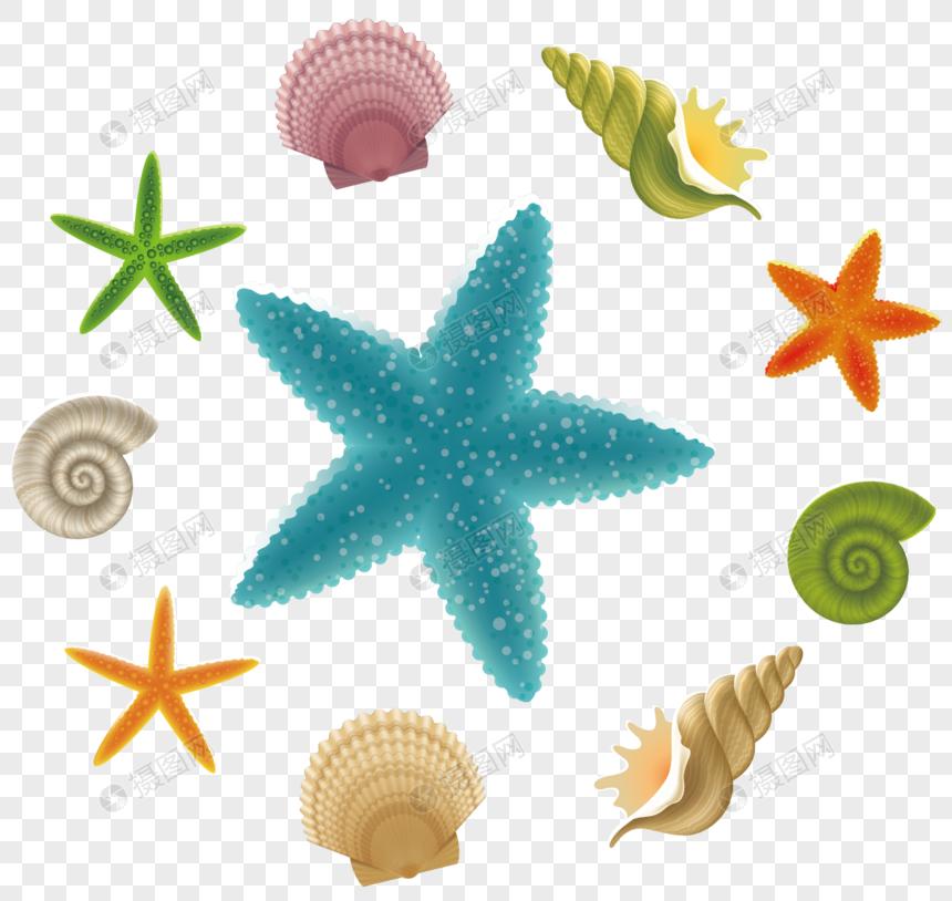 concha estrela do mar Imagem Grátis_Gráficos Número 400470596_ai.