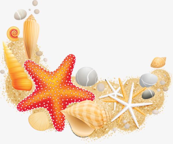 A Estrela Do Mar De Conchas Do Mar , Do Fundo Do Mar, A Estrela Do.