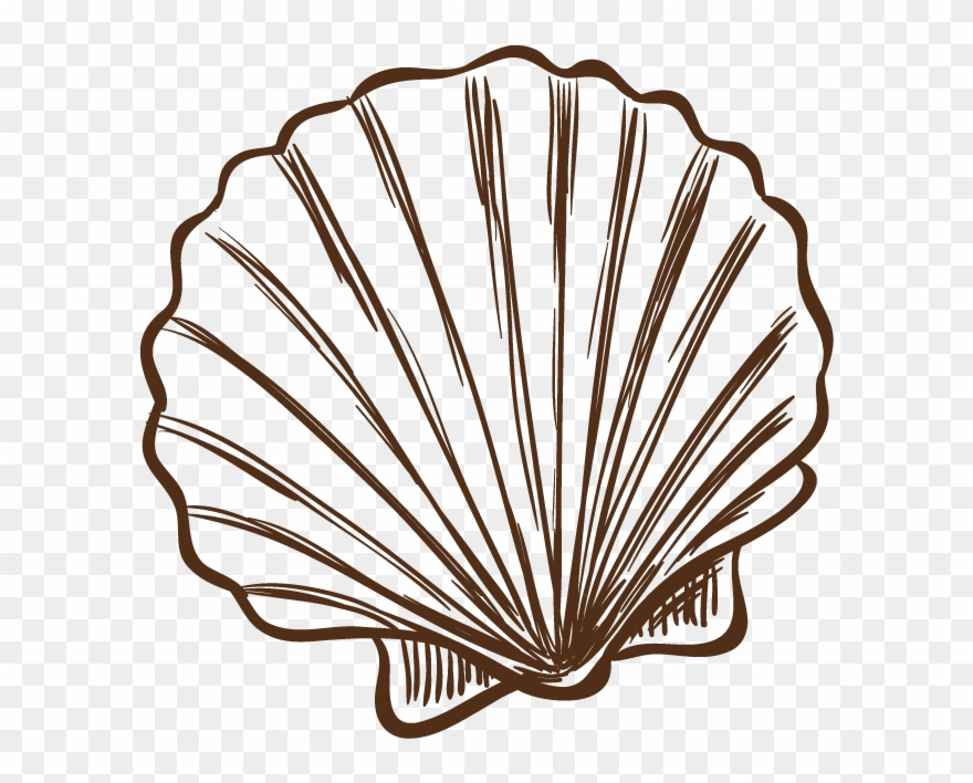 Seashell Illustration Hand Painted Banner Black And.