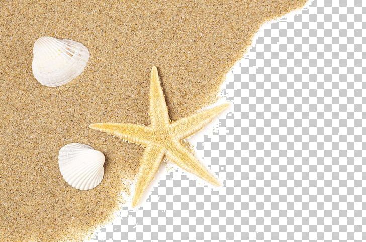 Beach Of La Concha Starfish Seashell Sand PNG, Clipart, 2016 Time.