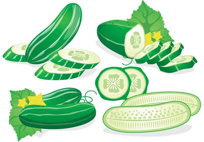 Vector de concombre frais.