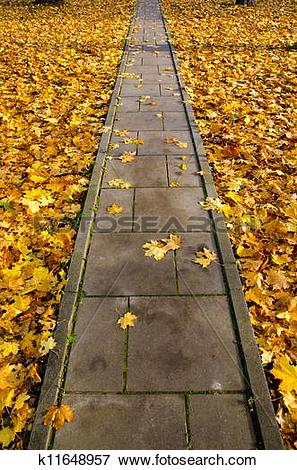 Picture of concrete park path through autumn leaves k11648957.