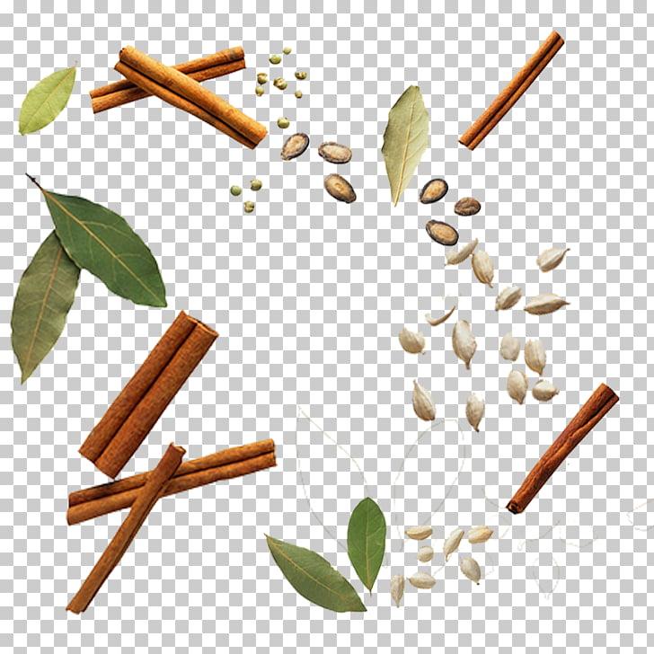 Ilustración de hojas y semillas verdes, especias condimento.